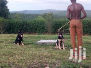 Security Dog Training | Pet Services for sale in Central Region, Kampala