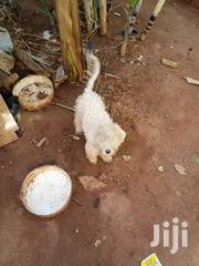 Home Pet | Dogs & Puppies for sale in Central Region, Wakiso