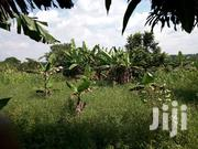 Farm Land for Sale 5acres in Zirobwe Wabitungulu Luweero 5m Per Acre | Land & Plots For Sale for sale in Central Region, Luweero