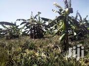 14acres of Land for Sale in Owobulenze Luweero 7m Per Acre | Land & Plots For Sale for sale in Central Region, Luweero
