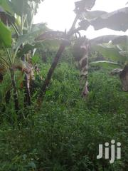 17 Acres in Busiika | Land & Plots For Sale for sale in Central Region, Wakiso