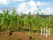 Namugongo-Budugara Plot of Land for Sale 15 Decimals | Land & Plots For Sale for sale in Central Region, Kampala