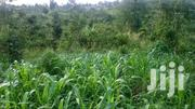 17 Acres Of Land For Sale In Butunduzi, Kyenjojo At 50 Millions. | Land & Plots For Sale for sale in Western Region, Kyenjojo