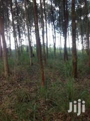 Land With Eucalyptus Trees | Land & Plots For Sale for sale in Western Region, Kibaale