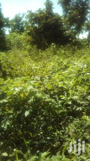 Suitable For Farming And Avillage Home | Land & Plots For Sale for sale in Central Region, Luweero