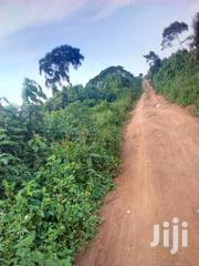 Fertile 4acres in Gomba_kanoni at 24m! | Land & Plots For Sale for sale in Central Region, Mpigi