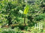 Land in Namusera Masaka Road Near Sema for Sale | Land & Plots For Sale for sale in Central Region, Kampala