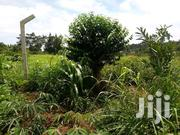 Land In Zirobwe Wabitungulu Luwero For Sale | Land & Plots For Sale for sale in Central Region, Luweero