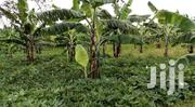 160 Acres Of Land For Sale | Land & Plots For Sale for sale in Central Region, Kampala