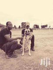 Dog Training And Other Services | Accounting & Finance CVs for sale in Central Region, Kampala