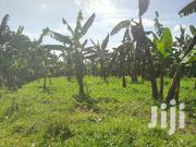 Agricultural Land on Sale | Land & Plots For Sale for sale in Western Region, Kabalore