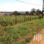12acres Of Land In Kira Nsasa At 280M Per Acre Negotiable | Land & Plots For Sale for sale in Central Region, Kampala