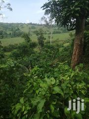 50 Acres in Gombe 2 Km From Turmac | Land & Plots For Sale for sale in Central Region, Mpigi