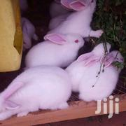 Giant Newzealand White On Quick Sale | Other Animals for sale in Central Region, Kampala