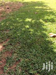 Plot for Sale: 50 by 100 in Matuga | Land & Plots For Sale for sale in Central Region, Kampala