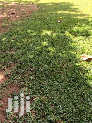 Plot for Sale: 50 by 100 in Matuga
