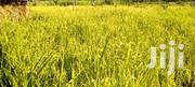 7acres of Land Atkm From Hgh Way With in Kagadi Town Coun | Land & Plots For Sale for sale in Western Region, Kibaale