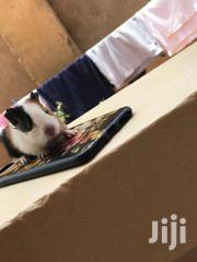 Guinea Pigs Both Male And Female   Other Animals for sale in Central Region, Kampala