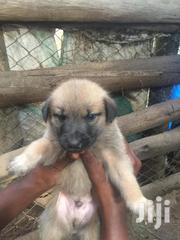 Baby Male Mixed Breed | Dogs & Puppies for sale in Western Region, Mbarara