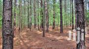 200 Acres Of Pine Trees In Mubende Kakumilo At The Age Of 18 Yrs   Land & Plots For Sale for sale in Central Region, Mubende