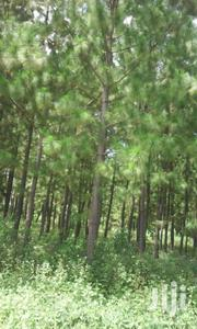 Land In Luweero For Sale | Land & Plots For Sale for sale in Central Region, Luweero