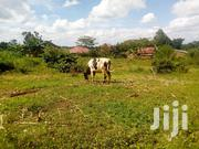 Plot of Land for Sale15 Decimals in Gayaza-Nakasajja | Land & Plots For Sale for sale in Central Region, Kampala
