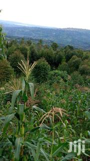 Gayaza:Half Acre For Sale At 55M | Land & Plots For Sale for sale in Central Region, Wakiso