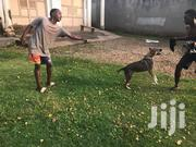 Professional Dog Trainer And Handler | Pet Services for sale in Central Region, Wakiso