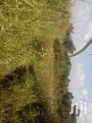 50x100 Titled Plot in Namusera Hoima Rd 1km Off Main at 15M | Land & Plots For Sale for sale in Central Region, Wakiso