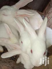 Rabbit 10,000/= | Mobile Phones for sale in Central Region, Kampala