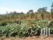 12 Acres of Land on Sale at 12m Per Acre in Nagojje, Mukono Along Jinj | Land & Plots For Sale for sale in Central Region, Kampala