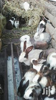 Rabbits For Sale | Livestock & Poultry for sale in Nothern Region, Gulu