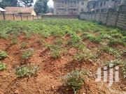 Residential Plot At Nyanama For Sale | Land & Plots For Sale for sale in Central Region, Kampala