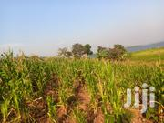 40 Acres of Land at Bulutwe | Land & Plots For Sale for sale in Central Region, Mukono