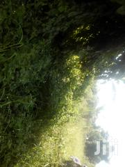 Titled Half Acre on Masaka Rd After Kyengera Town 600 Metres Off Main   Land & Plots For Sale for sale in Central Region, Wakiso