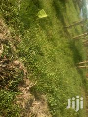 6 Titled Acres Sold Cheaply Just After Kakiri on Hoima Rd 1km Off Main | Land & Plots For Sale for sale in Central Region, Wakiso