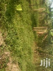 Titled 50x100 Plot in Kyengera Town Along Masaka Rd 600 Metrs Off Main | Land & Plots For Sale for sale in Central Region, Wakiso