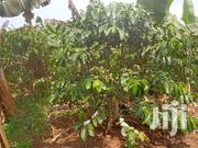 Well Developed Agricultural Land on Sale | Land & Plots For Sale for sale in Western Region, Kyenjojo