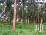 Land With Eucalyptus Tree In Mityana For Sale | Land & Plots For Sale for sale in Central Region, Wakiso