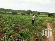 Farm Land Of Ten Acres On Quick Sale In Matuga Kiwebwa Semuto Rd Title | Land & Plots For Sale for sale in Central Region, Kampala
