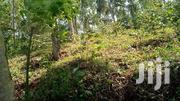 On Sale: 5acres in Nkokonjeru 14km of Main Road at Asking 45m | Land & Plots For Sale for sale in Central Region, Kampala