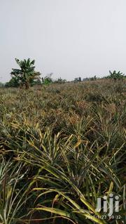 Land In Nakasongola For Sale | Land & Plots For Sale for sale in Central Region, Nakasongola