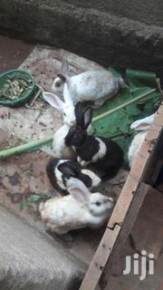 Pregnant Rabbits | Livestock & Poultry for sale in Central Region, Kampala