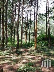 300 Acres In Masaka Kyotera, 70 Acres Coverd With Eucalyptus | Land & Plots For Sale for sale in Central Region, Masaka