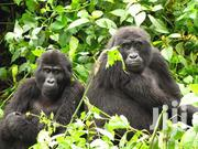 Quick Tour And Travel | Travel Agents & Tours for sale in Central Region, Kampala