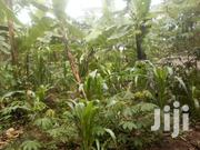 250 Titled Acres In Luweero 15km From Katikamu From 10 Onwards Sold | Land & Plots For Sale for sale in Central Region, Luweero
