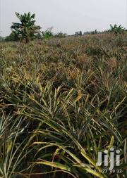 640 Acres In Luwere For Sale | Land & Plots For Sale for sale in Central Region, Wakiso