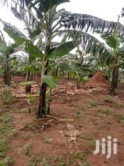 Mailo Land for Sale | Land & Plots For Sale for sale in Central Region, Mukono