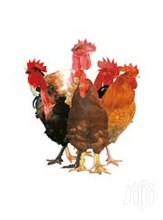 Sassso Chics | Livestock & Poultry for sale in Western Region, Mbarara