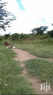 500 Acres Land In Kikyusa Kamira For Sale   Land & Plots For Sale for sale in Central Region, Luweero